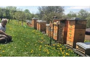 Vytáčení medu se již rychle blíží